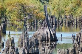 Negyvojo ežero paslaptis