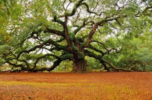 Medis nešantis mirtį