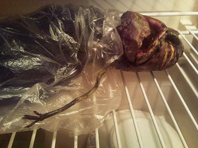 Rusė teigia 2 metus šaldytuve laikiusi ateivio kūną