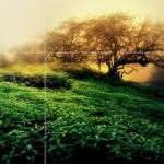 Sapnai – praeities ir ateities atspindys