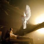 Sussitikimas su gyvu angelu