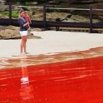 Sidnėjaus paplūdimiai nusidažė raudona spalva
