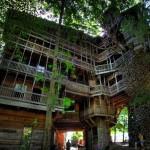 Aukščiausias medžio namelis pasaulyje