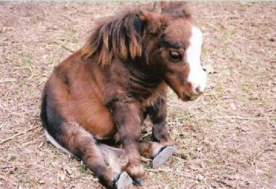 maziausias arklys pasaulyje 3