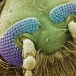 Objektai žvelgiant į juos pro mikroskopą