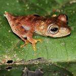 Pietų Amerikoje rastos 46 naujos gyvūnų rūšys