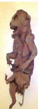 ateiviu mumija 2