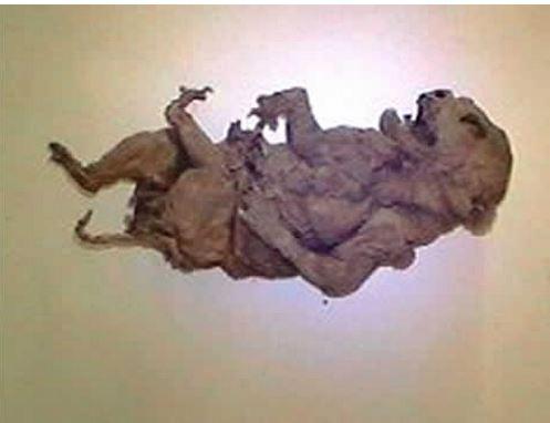 ateiviai mumija