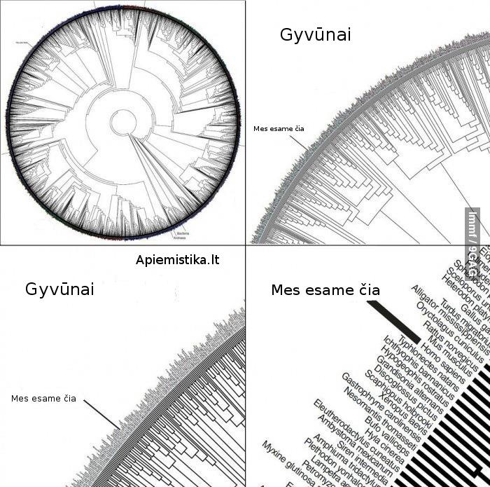 Biologinė įvairovė Žemėje