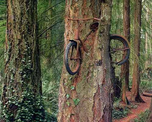 dviratis medyje 2