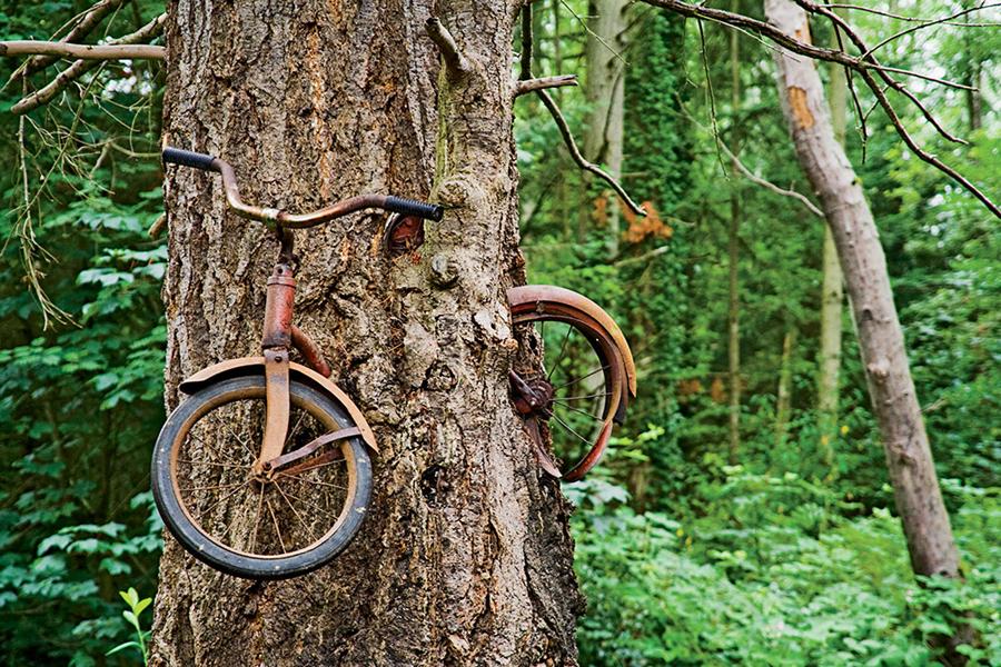 dviratis medyje
