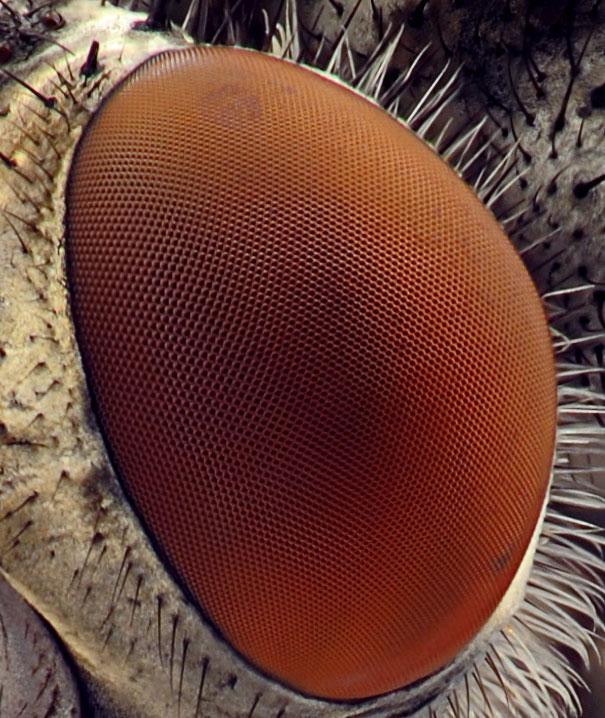 muses akis pro mikroskopa