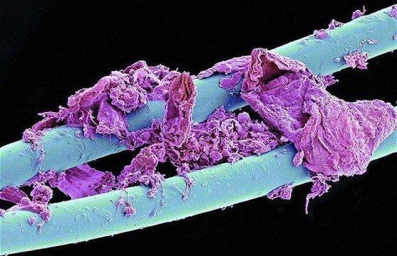 panadotas dantu siulas