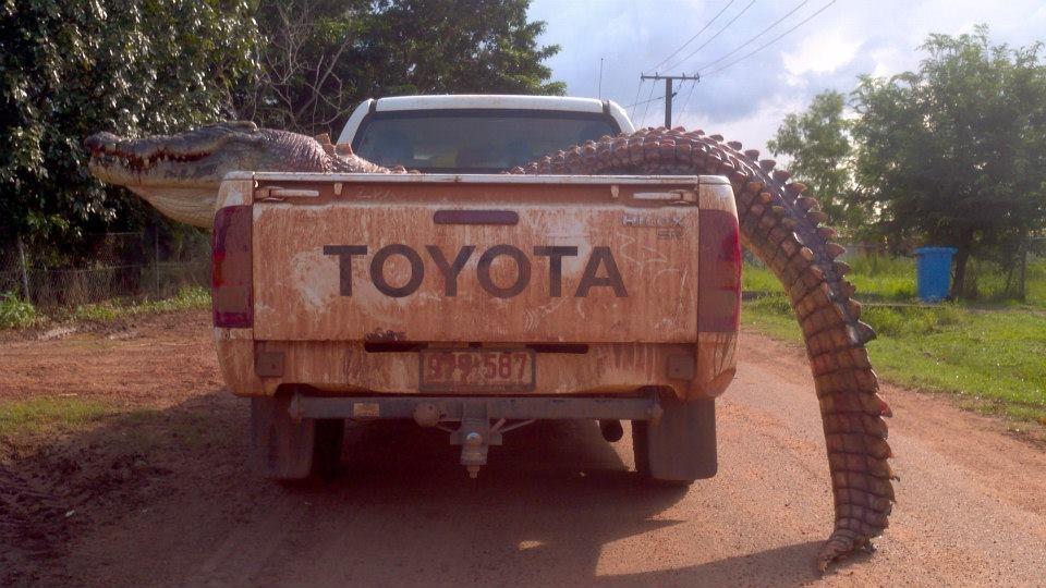 Australijoje sugautas 5 metrų krokodilas