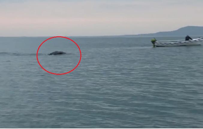 Airijos žvejai nufilmavo dar vieną Lochneso pabaisą?