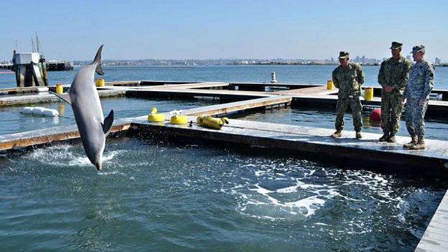 delfinai 2