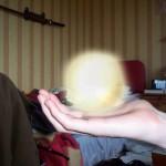 PSI kamuolio sukūrimas