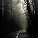Susitikimas su paslaptinga būtybe kelyje