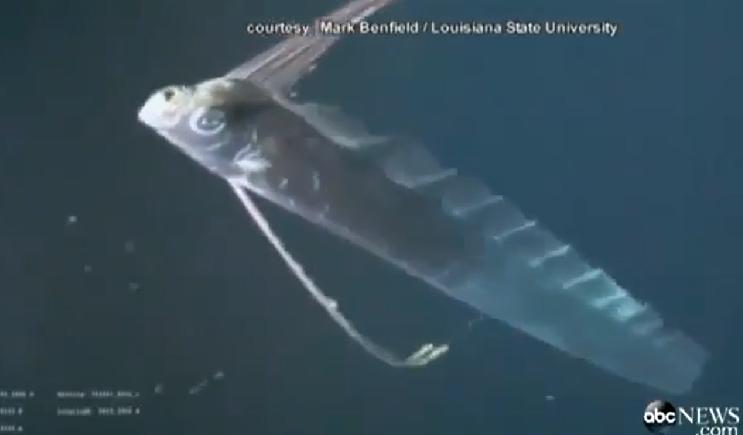 11 metrų mitinis jūros padaras užfiksuotas kamerų
