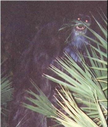 Beždžionė-skunsas