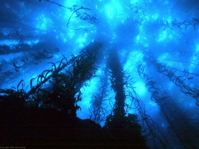 vandenyno gelmes