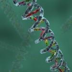 Žmogaus DNR turi slaptą kodą