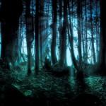 Užburtas miškas