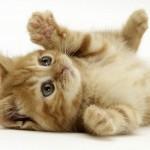 Beveik pusė moterų, kurioms įkando katė, suserga depresija