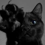 Kodėl juoda katė yra blogas ženklas?