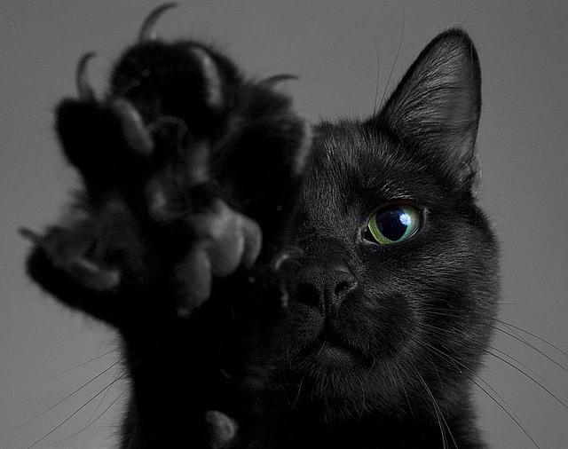 juoda kate