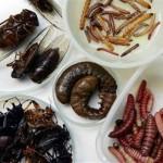 Skaniausi vabzdžiai pasaulyje