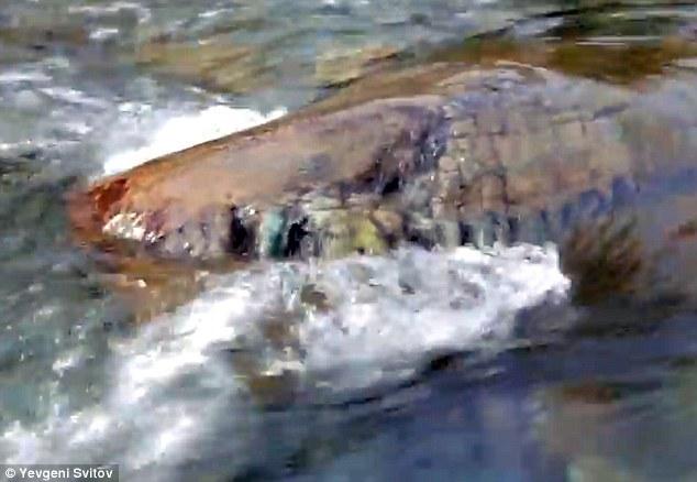 Sibiro krokodilo galvos mįslė